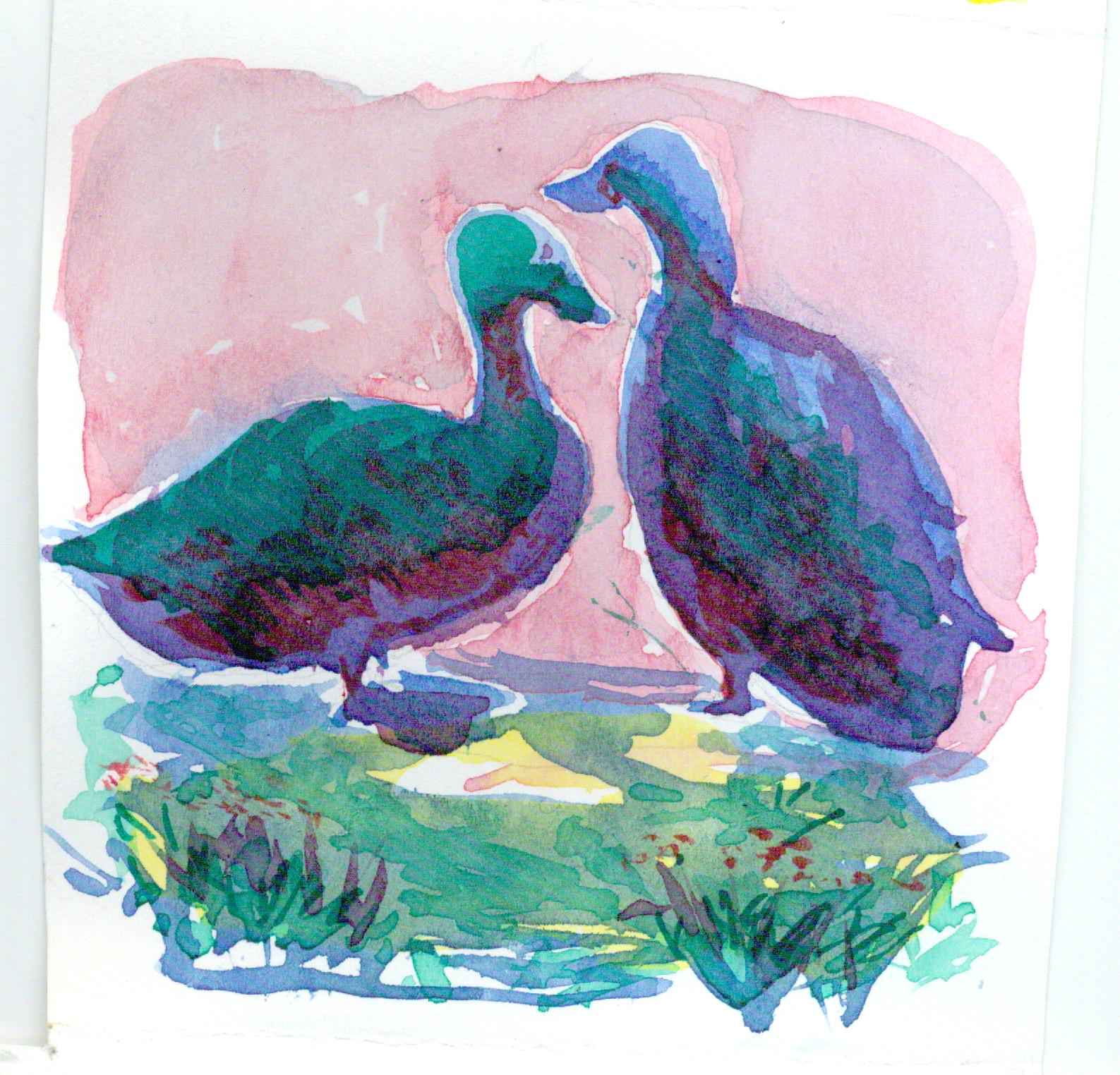 Cayuga Ducks by RC